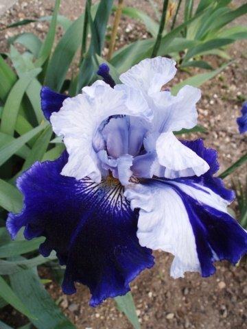 Bonjour et bienvenue au coeur de ma source, amis de poésie iris-bleu